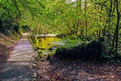 Bolton Abbey - Sunlight Through Leaves