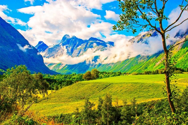 Meadow in Norway