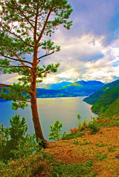 Tree in Norway