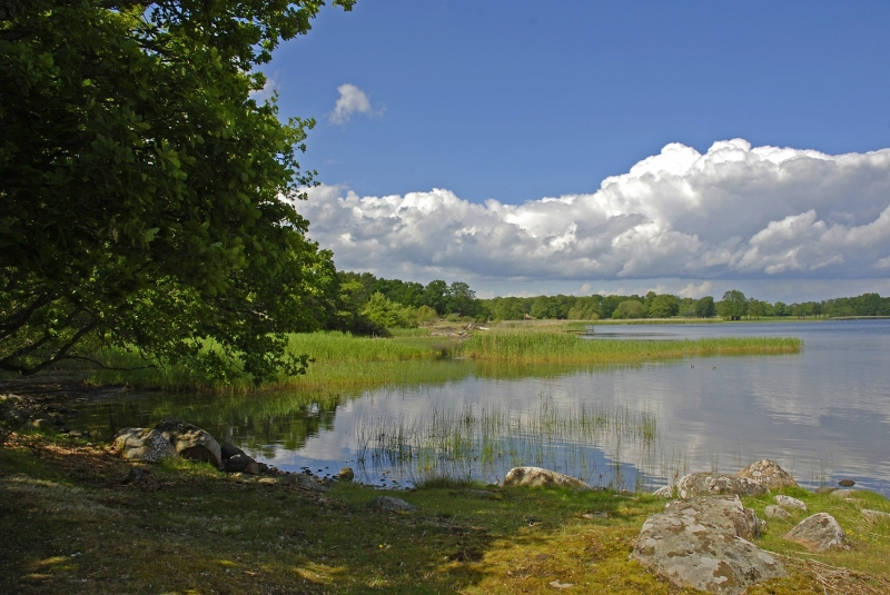 Kuggaboda-Nature-Reserve-Shoreline