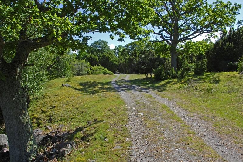 Kuggaboda-Nature-Reserve-Track