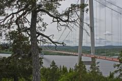 Hogakustenbron-and-Tree