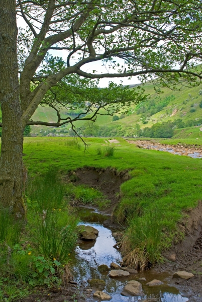 Swaledale Shady Brook